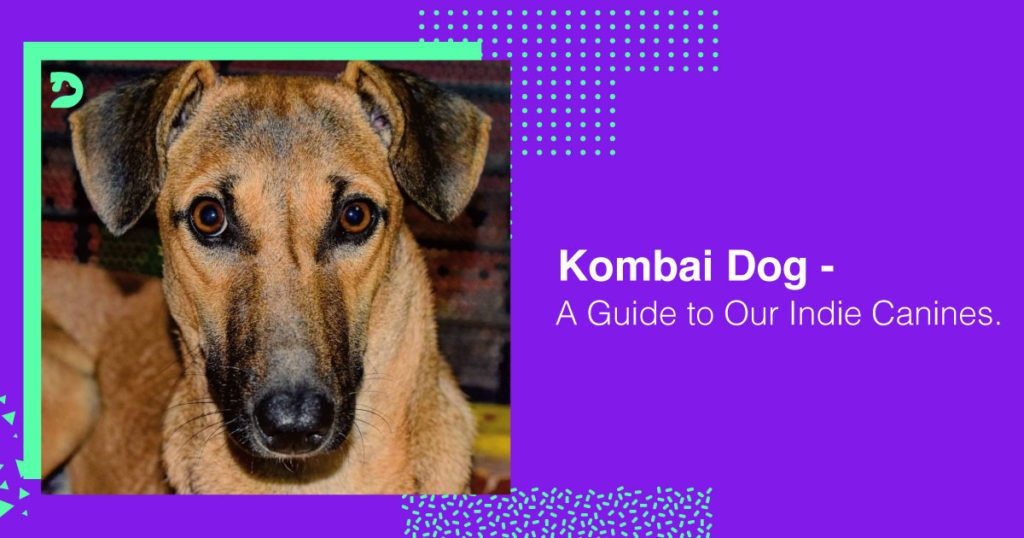 Kombai Dog Guide Indie Canines