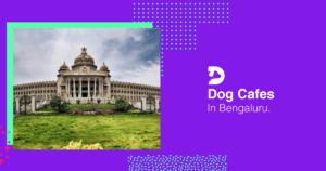 Dog Cafes In Bangalore